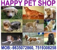 HAPPY PET SHOP